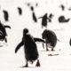 Antarktis: nur Vögel und Eis?